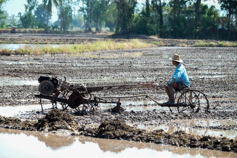 Agriculteur thaïlandais à l'aide du tracteur de talle dans le domaine de riz photos libres de droits