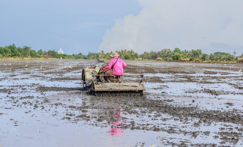 Agriculteur thaïlandais à l'aide du tracteur de talle dans le domaine de riz photo stock