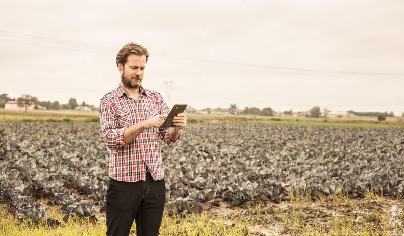 Agriculteur travaillant à utiliser le comprimé devant le champ de chou photographie stock libre de droits