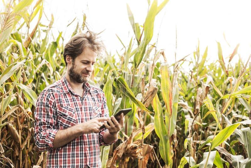 Agriculteur travaillant à utiliser le comprimé devant le champ de maïs image stock