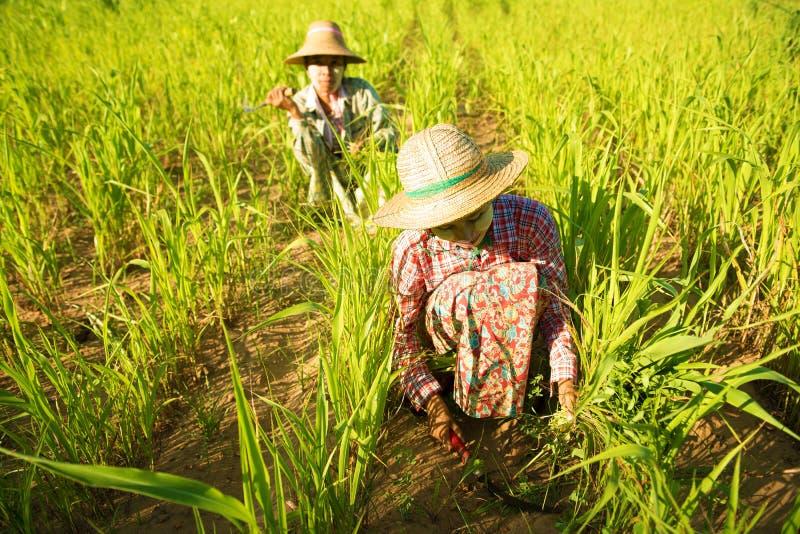 Agriculteurs asiatiques traditionnels photographie stock libre de droits
