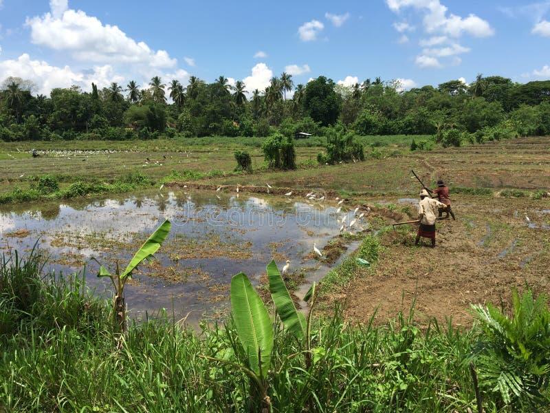 Agriculteurs au travail photo libre de droits