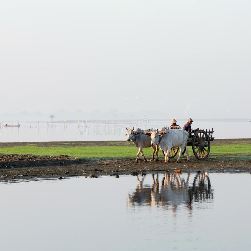 Agriculteurs birmans photos stock