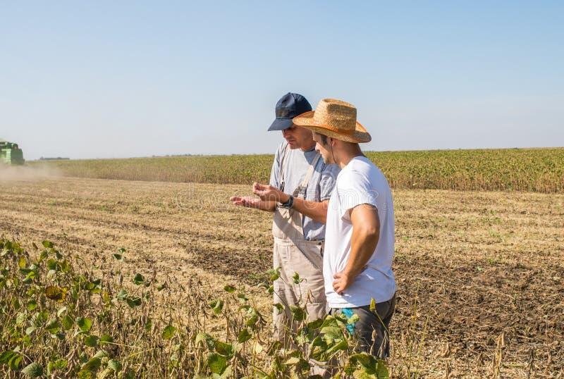 Agriculteurs dans des domaines de soja image stock