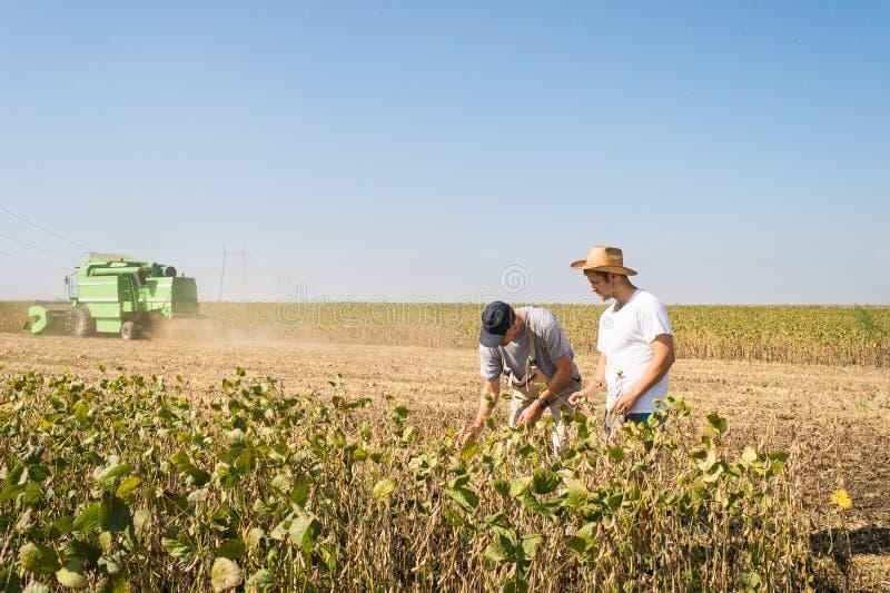 Agriculteurs dans des domaines de soja photo libre de droits
