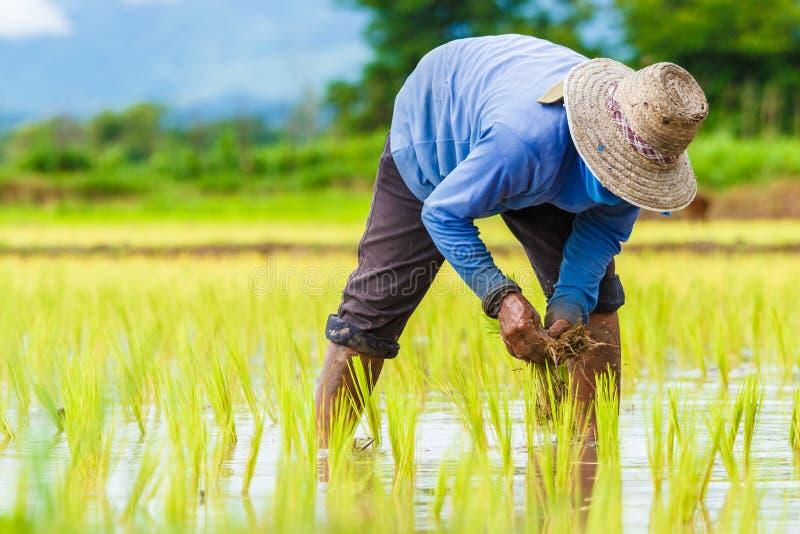 Agriculteurs de la Thaïlande photographie stock libre de droits