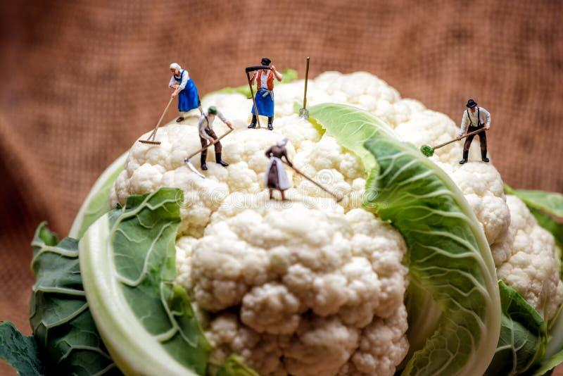 Agriculteurs et chef miniatures de chou-fleur photos libres de droits