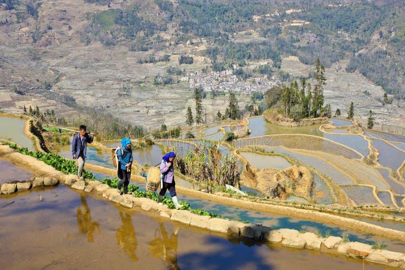 Agriculteurs marchant dans le domaine de terrassement de Yuanyang images stock