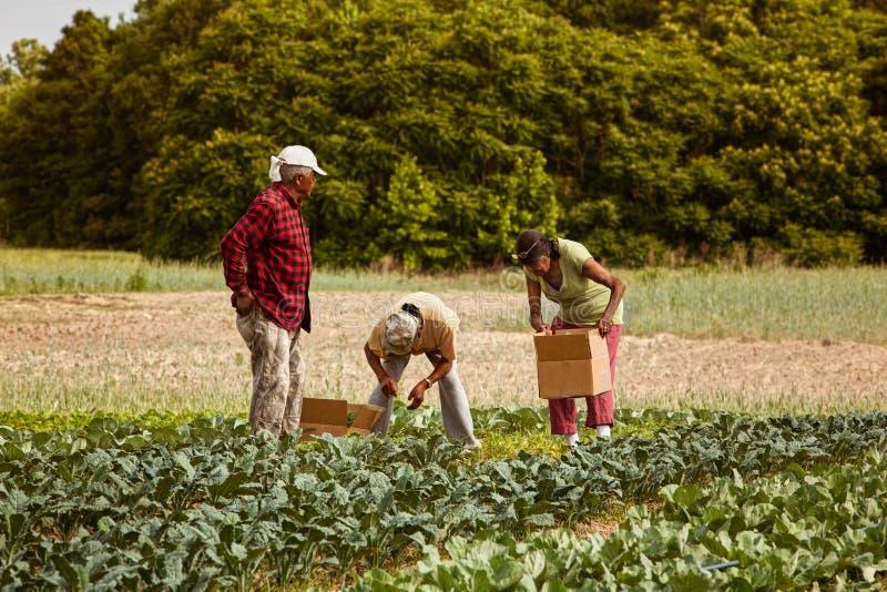 Agriculteurs organiques image libre de droits