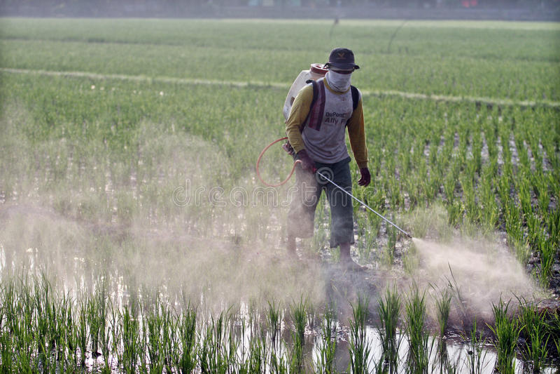 Agriculteurs pulvérisant des cultures images stock