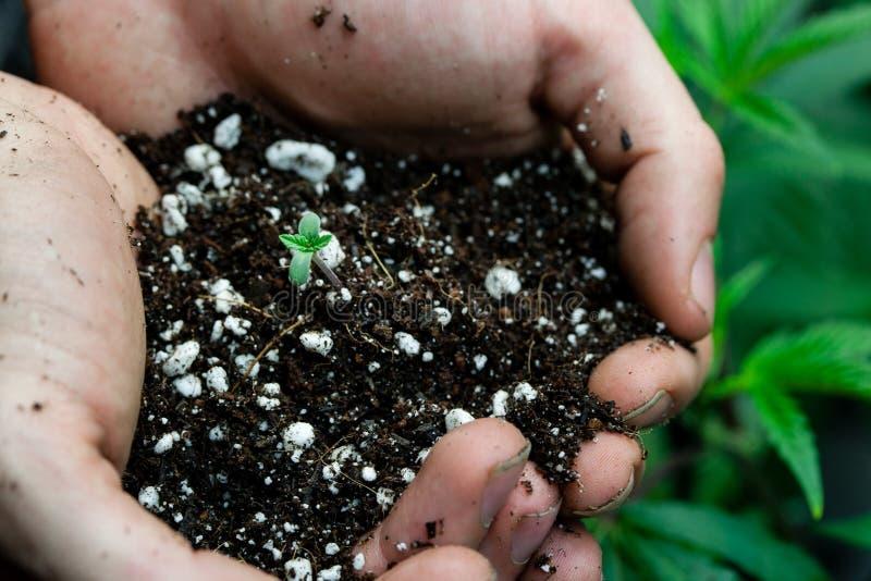 Agriculteurs tenant le sol avec la plante en pot de bébé image libre de droits