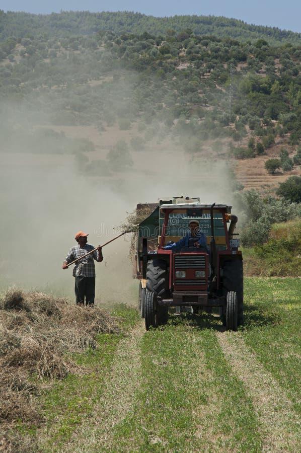 Agriculteurs travaillant dans la saison et la batteuse de récolte dans Aydin, Turquie égéenne photo stock