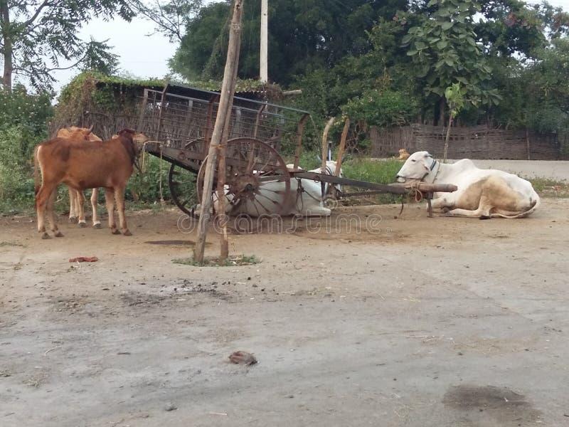 Agriculteurs typiques animaux image libre de droits