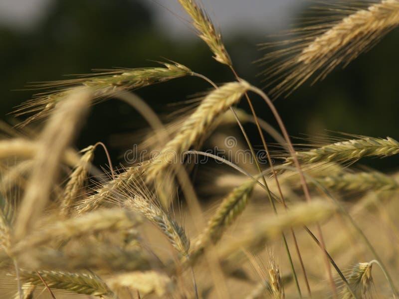 Agricultura foto de archivo libre de regalías