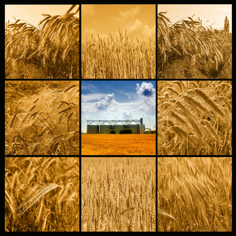 Agricultura imagens de stock royalty free