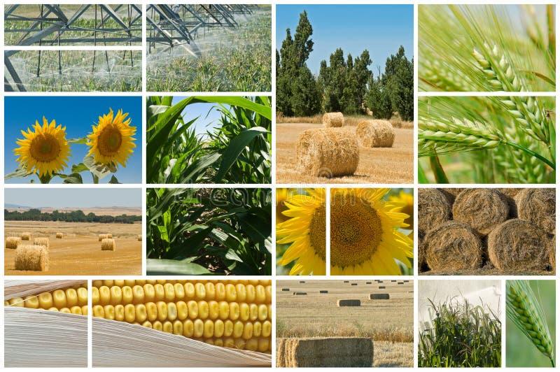 Agricultura. foto de stock
