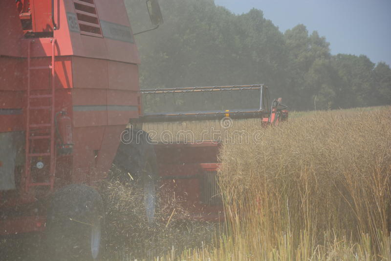 agricultura fotos de stock royalty free