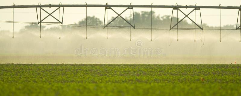 Irrigação no campo imagens de stock royalty free