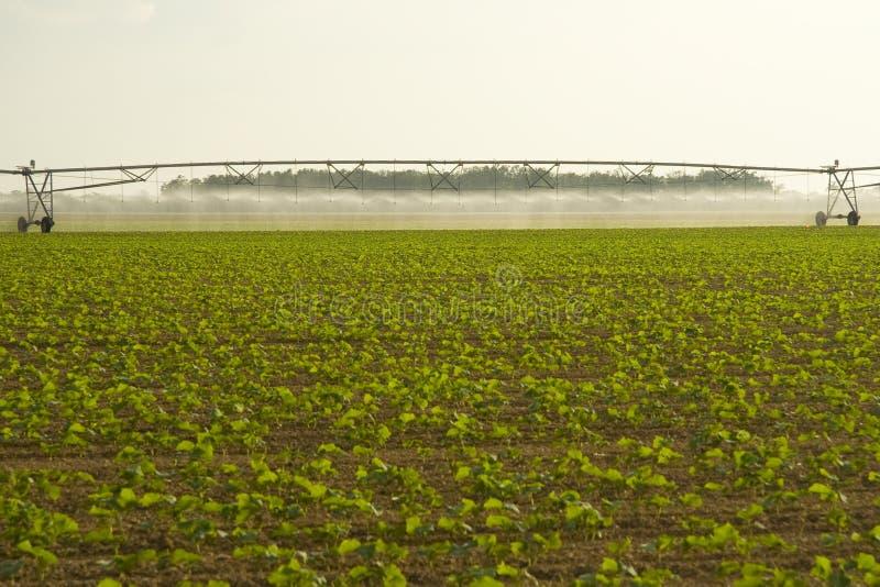Colheitas de irrigação no campo imagens de stock