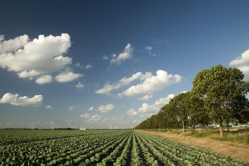 Agricultura imagen de archivo
