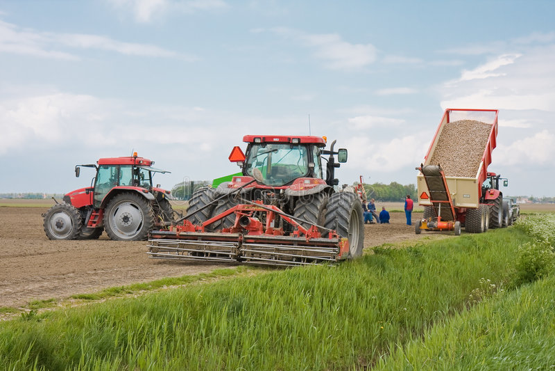 Agricultura foto de stock royalty free