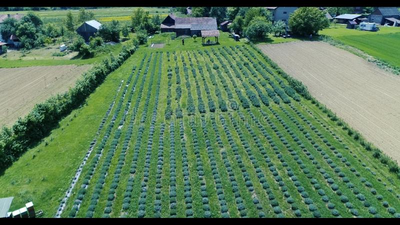 agricultura fotografia de stock royalty free