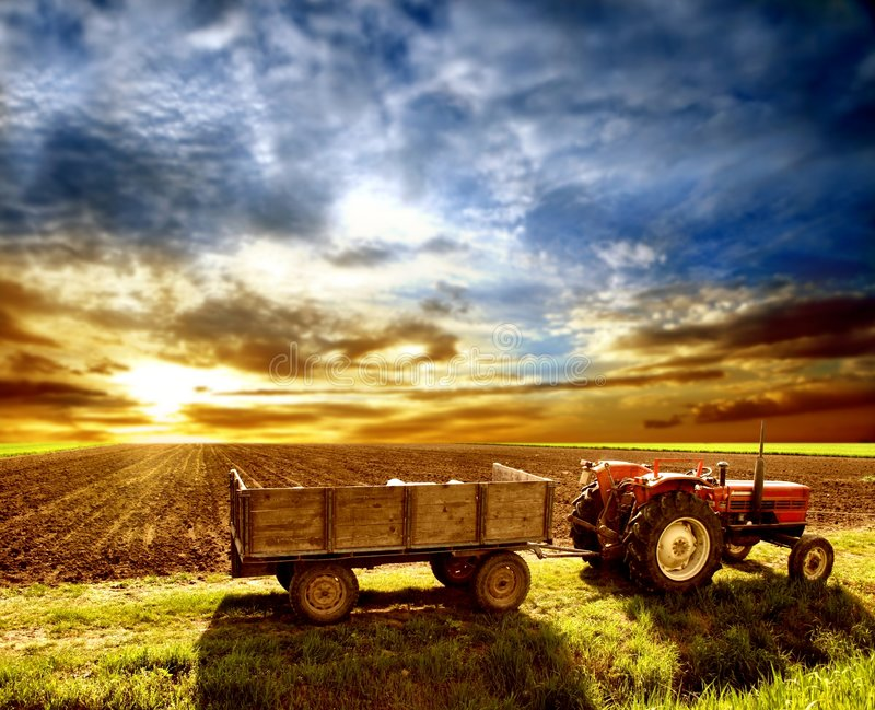 A agricultura ajardinou fotos de stock royalty free