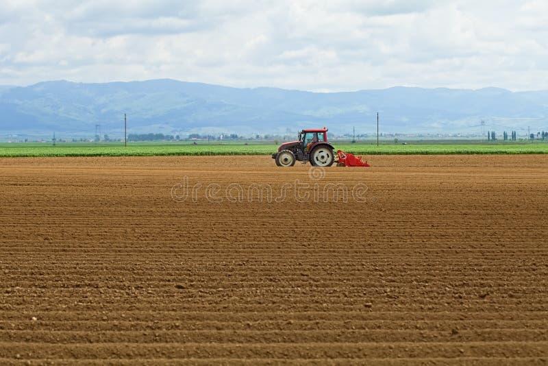 Agricultura - batatas da sementeira do trator fotografia de stock royalty free