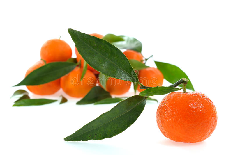 Agricultura biológica de las clementinas frescas, en un fondo blanco imagen de archivo