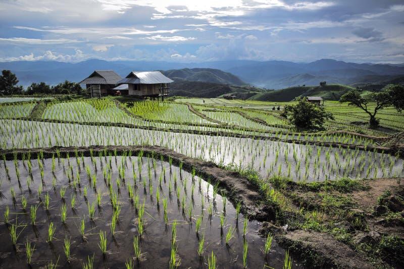 Agricultura da montanha imagem de stock royalty free
