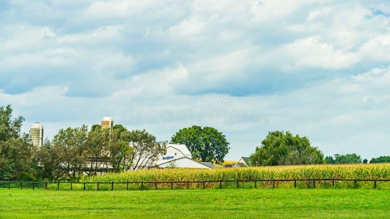 Agricultura de campo cornfield de Amish en Lancaster, PA EE.UU. foto de archivo libre de regalías