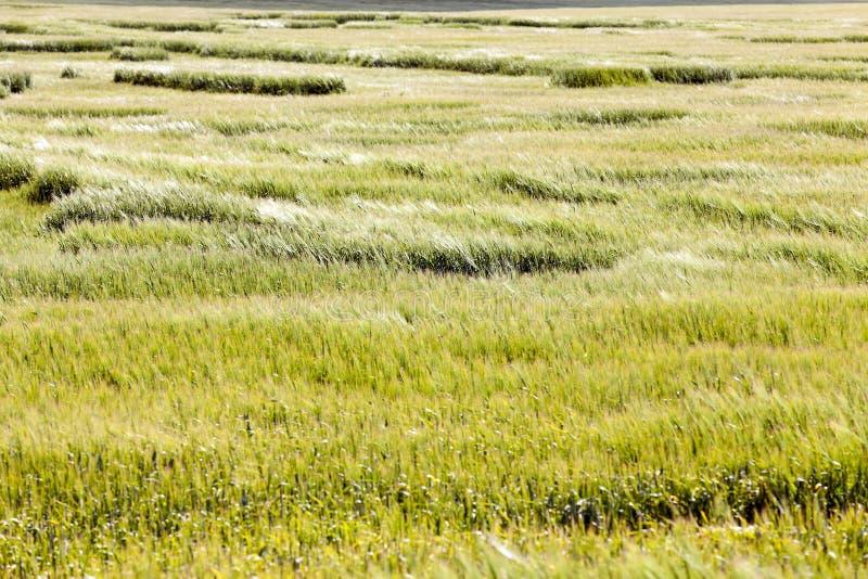 Agricultura de la foto, Europa imágenes de archivo libres de regalías