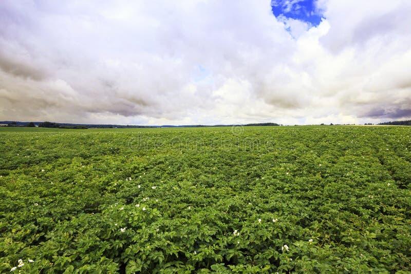 Agricultura de la foto, Europa imagenes de archivo