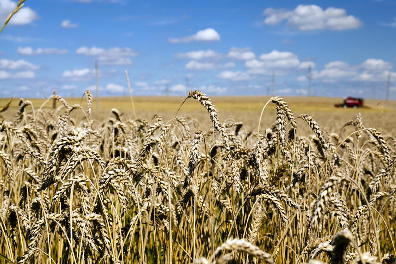 Agricultura de la foto, Europa foto de archivo