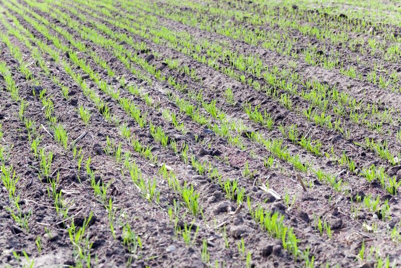 Agricultura de la foto, Europa fotos de archivo libres de regalías