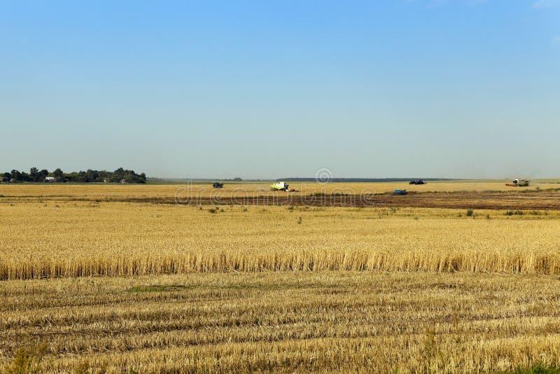 Agricultura de la foto, Europa foto de archivo libre de regalías