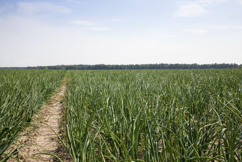 Agricultura de la foto, Europa imagen de archivo libre de regalías