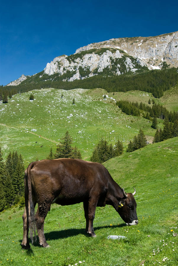 Agricultura de la montaña en Rumania foto de archivo libre de regalías