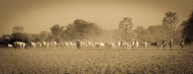 Agricultura de Myanmar fotografía de archivo