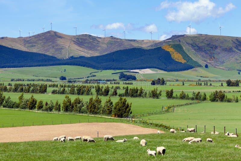 Agricultura de Nova Zelândia foto de stock