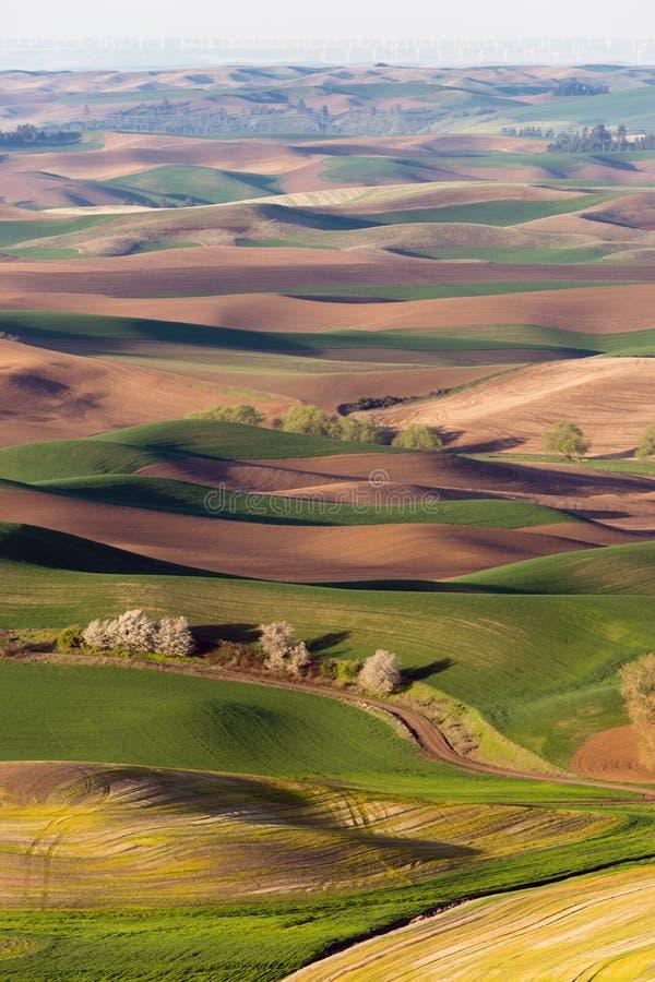 Agricultura de Rolling Hills de las tierras de labrantío de la mota de Steptoe de la región de Palouse imagen de archivo libre de regalías