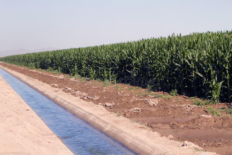 Agricultura del desierto que cultiva el canal de la irrigación imagen de archivo libre de regalías
