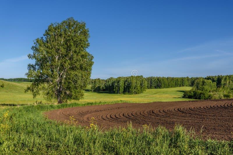 Agricultura do vidoeiro do sulco do prado do campo fotografia de stock royalty free