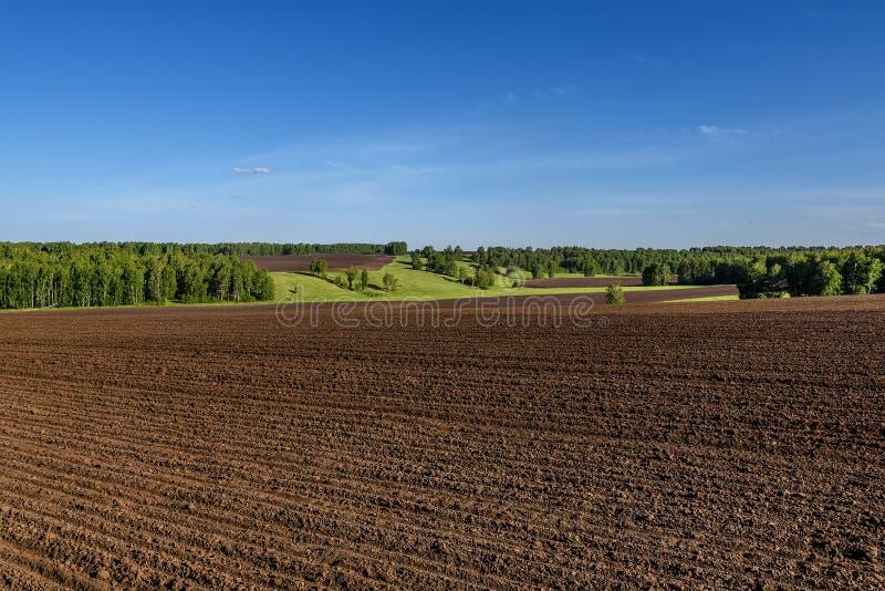Agricultura do vidoeiro do sulco do prado do campo fotografia de stock