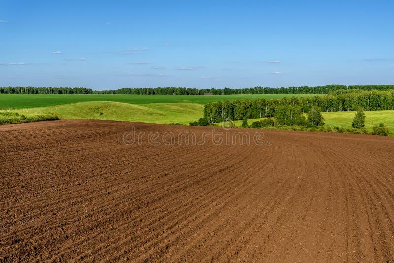 Agricultura do vidoeiro do sulco do prado do campo imagem de stock