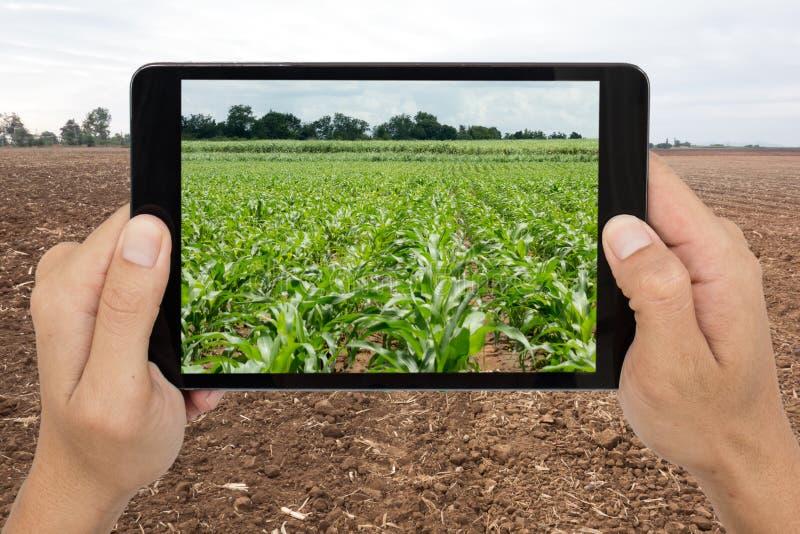 Agricultura elegante con la tecnología aumentada c futurista de la realidad imagenes de archivo