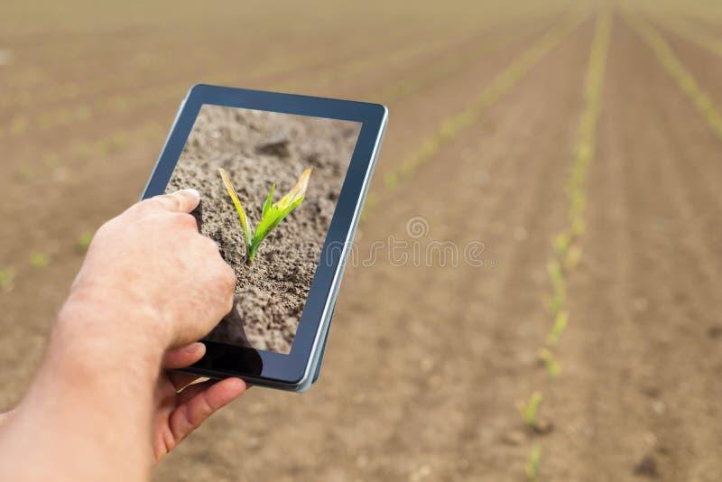 Agricultura elegante Granjero que usa la tableta Daño de Frost a las plantas imágenes de archivo libres de regalías