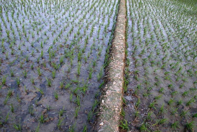 Agricultura em India imagem de stock