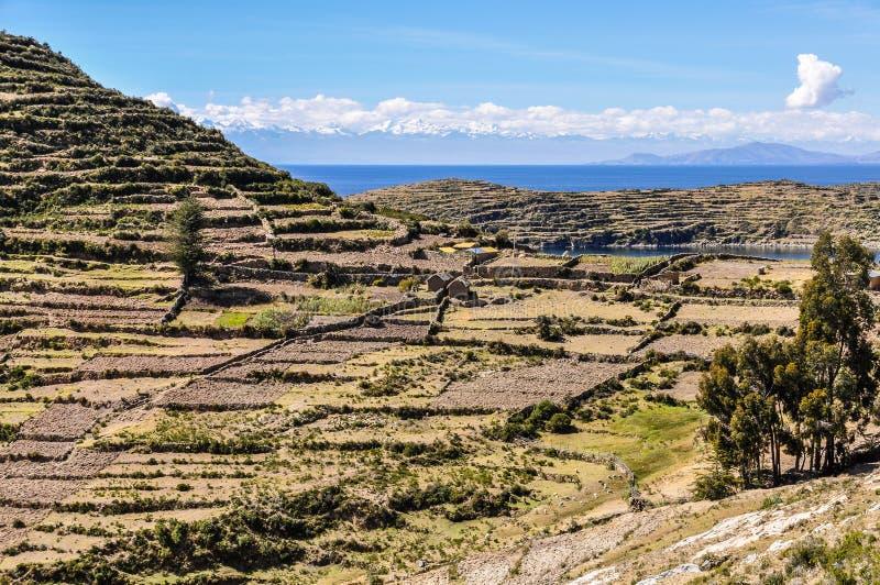 Agricultura em Isla del Sol no lago Titicaca em Bolívia fotografia de stock royalty free