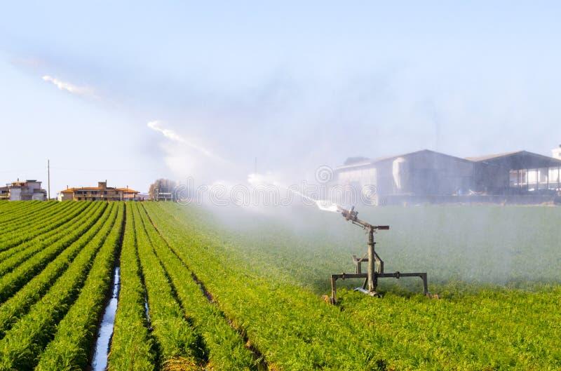 Agricultura em italy imagem de stock royalty free